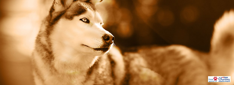 Can I Use Dog Hydroxyzine