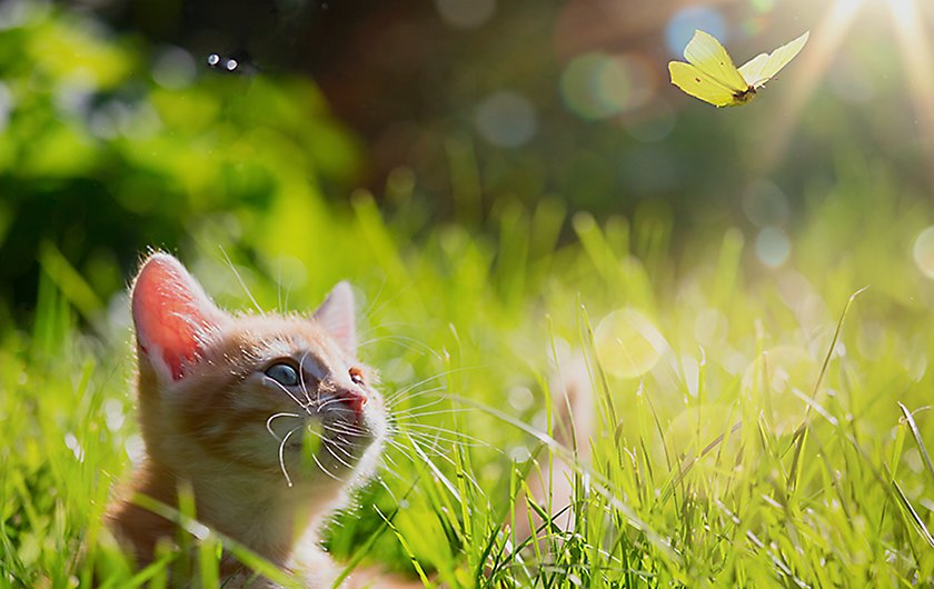 Cat watching butterfly in grass