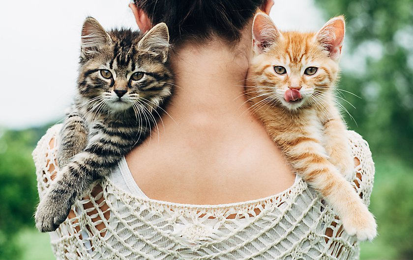Two cats on woman's shoulders