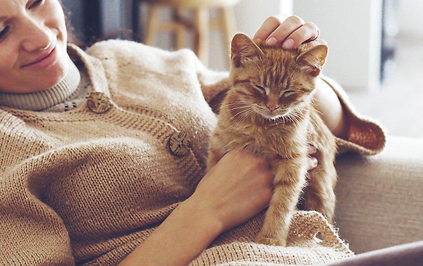 Pet parent petting cat