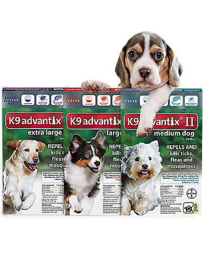 A dog leaning on K9Advantix 6 packs