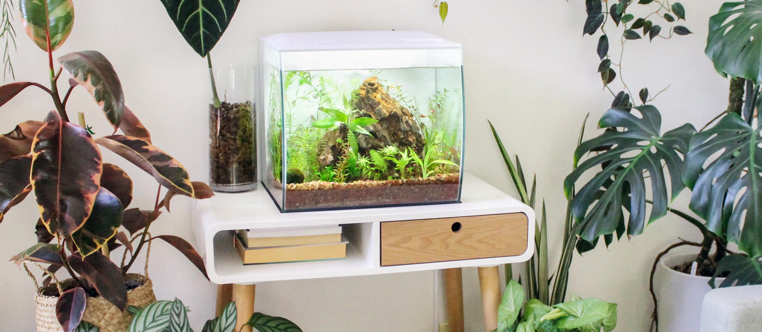 Build Your Underwater Garden