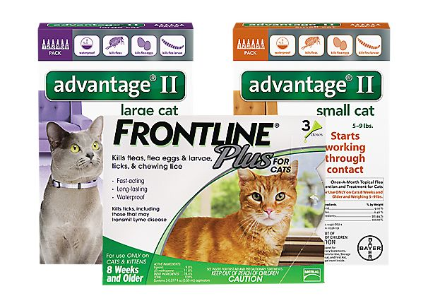 cat flea & tick