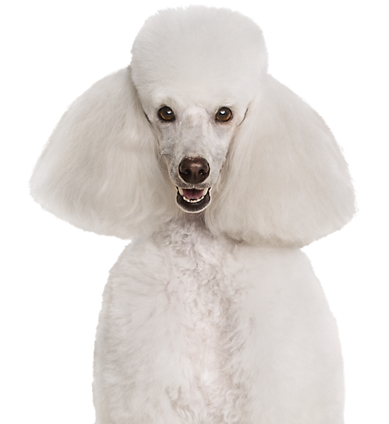 Petsmart Dog Grooming Training