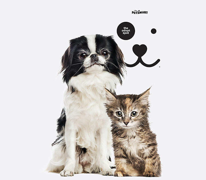 Puppy and kitten with NAW logo