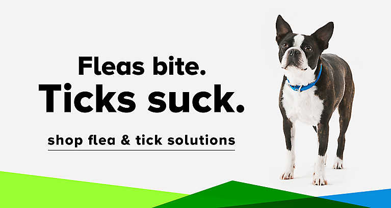 Dog Flea & Tick