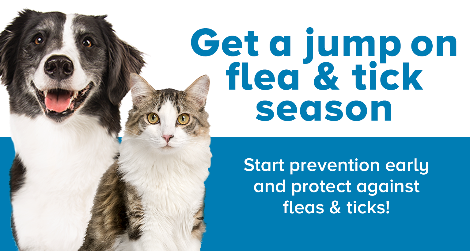 flea and tick skinny banner