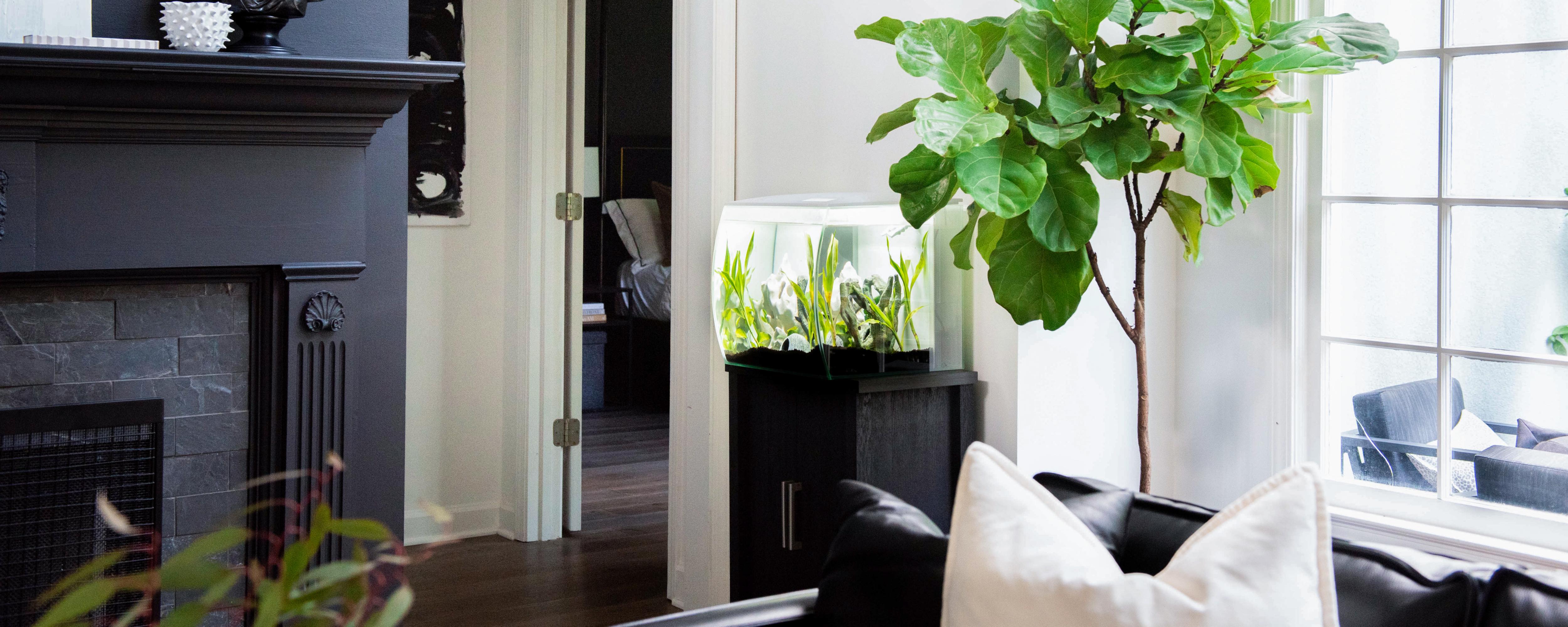 Design Your Modern Oasis