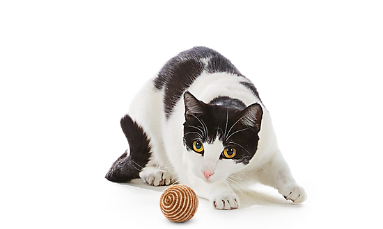 cat toys interactive toys for cats amp kittens petsmart