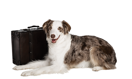 Dog Travel Accessories Amp Supplies Travel Products For