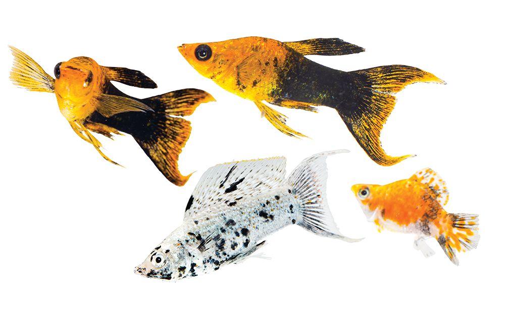 Aquariums fish tanks stands petsmart for Petsmart fish aquariums