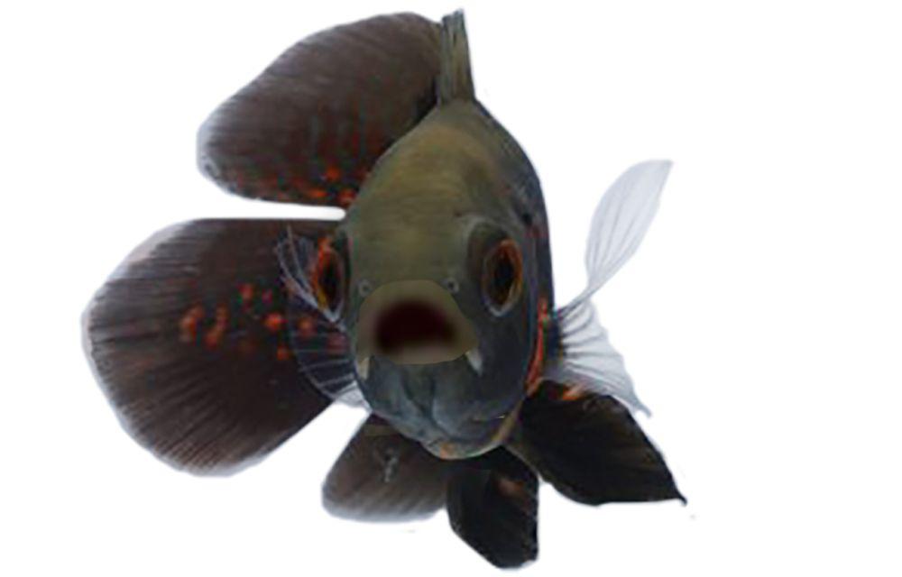 Automatic Fish Feeders Petsmart