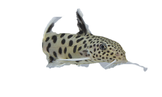 Fish tank aquarium filters petsmart for How much are fish at petsmart