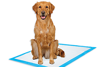 Petsmart Small Dog Diapers