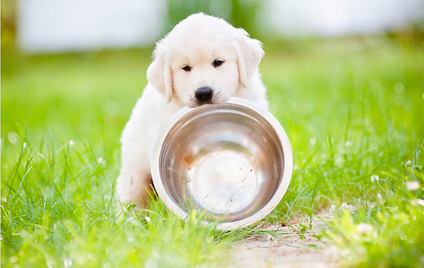 See how healthy your dog can be?