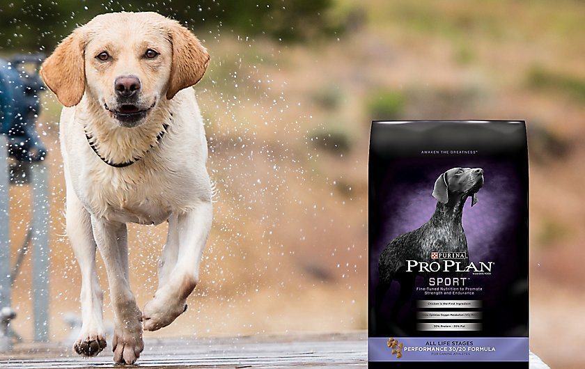fuel for highly active canines