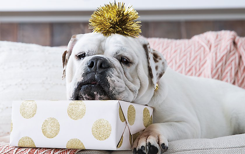 gifts for pet parents
