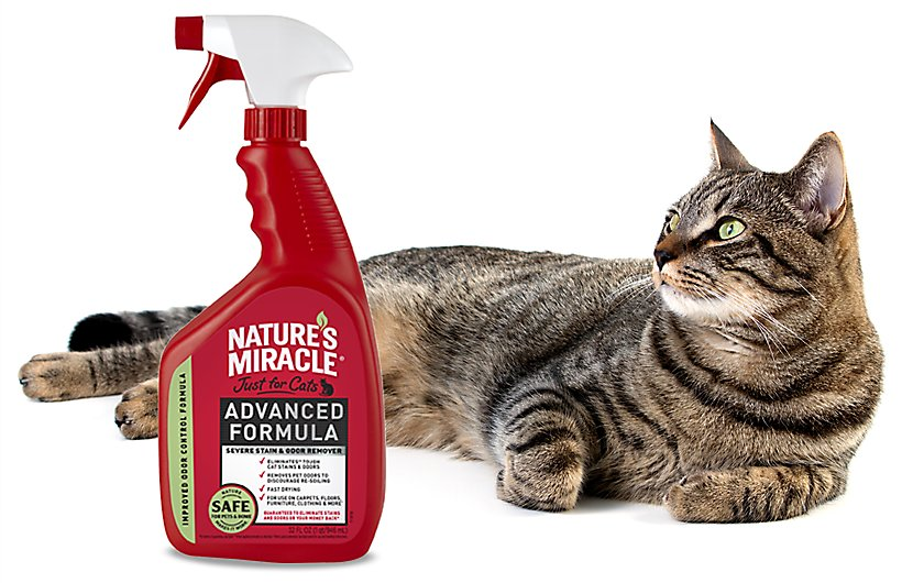 eliminate severe pet messes