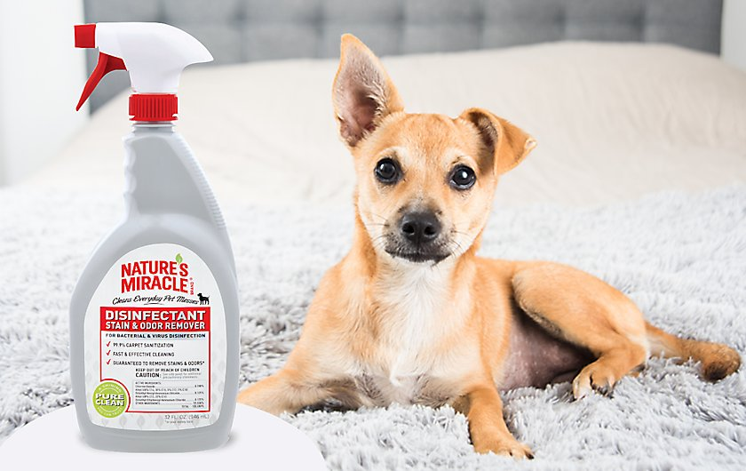 clean pet messes & disinfect