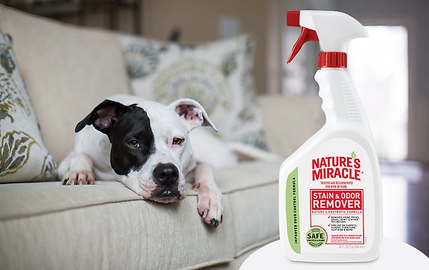 everyday pet mess stain & odor removers