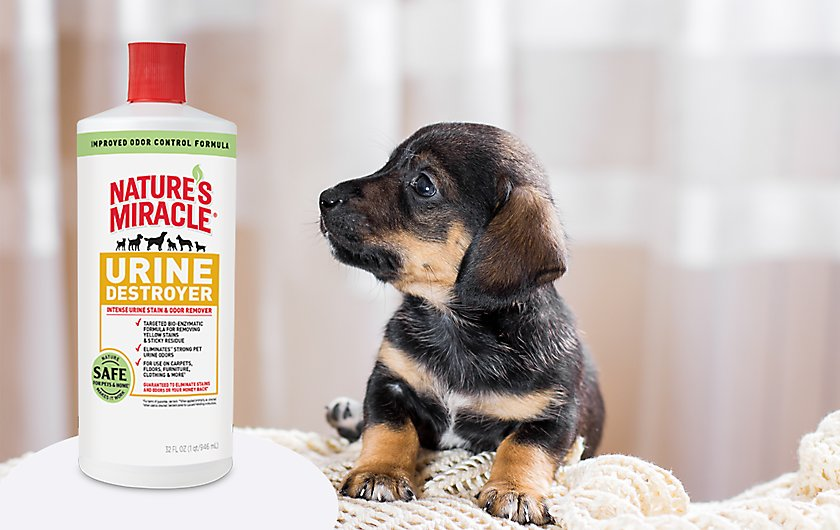 remove tough pet urine messes