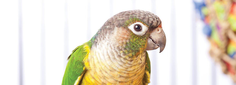 bird breeds
