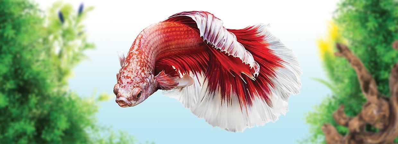fish breeds