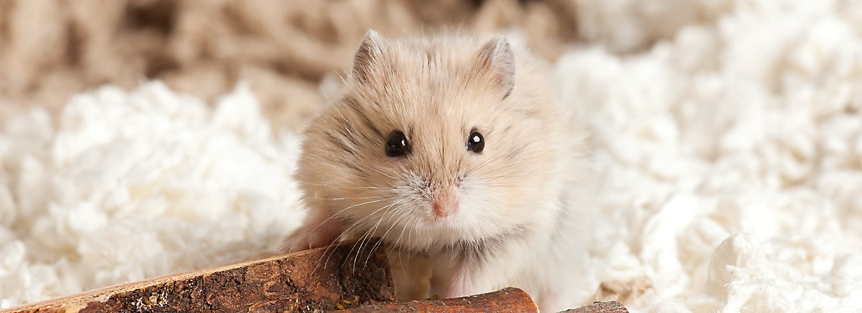 Small Pets for Sale: Hamsters, Gerbils, Mice & More | PetSmart