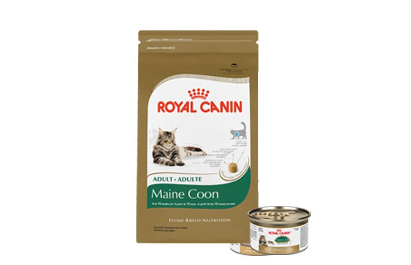 royal canin cat food kitten food petsmart. Black Bedroom Furniture Sets. Home Design Ideas