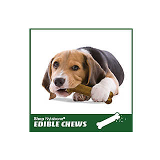 Shop Nylabone Edible Chews