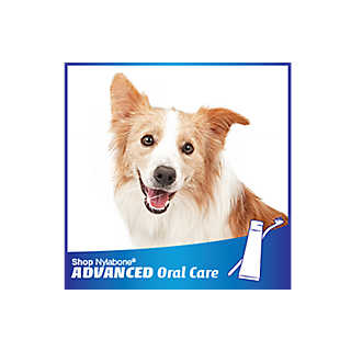 Shop Nylabone Advanced Oral Care