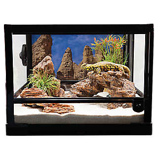 how do I set up a home for my new reptile?