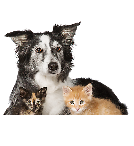 Cats and Dogs for Adoption: PetSmart Saves Lives