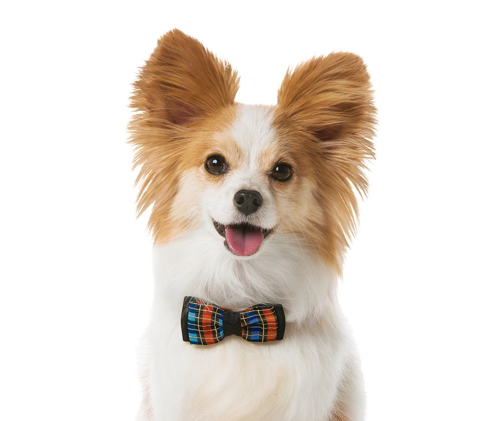 Dog Adoption Video
