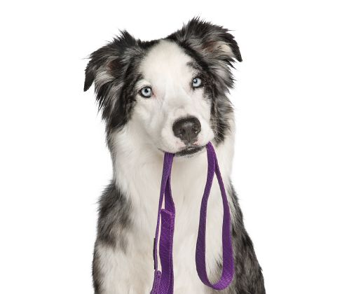 Pet Services: Grooming, Training, Doggie Day Camp & More | PetSmart