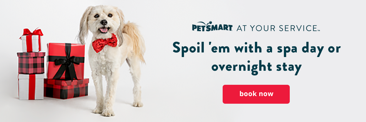 Holiday Pet Services, from Grooming to PetsHotel, book now >