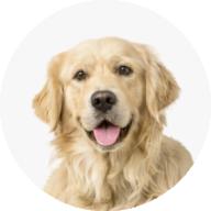 Dog_Category_150x150-01