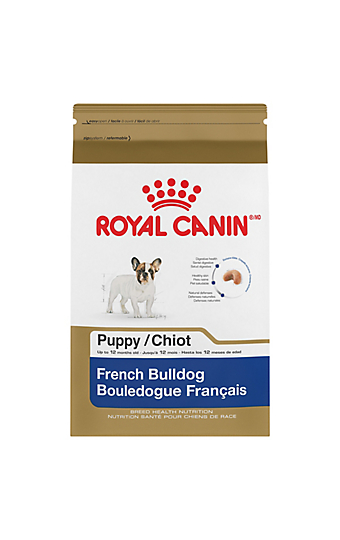 french bulldog adult dry dog food royal canin breed health nutrition. Black Bedroom Furniture Sets. Home Design Ideas