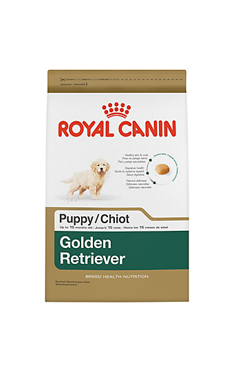 golden retriever adult dry dog food royal canin breed health nutrition. Black Bedroom Furniture Sets. Home Design Ideas