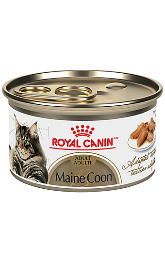 maine coon adult dry cat food royal canin feline breed. Black Bedroom Furniture Sets. Home Design Ideas