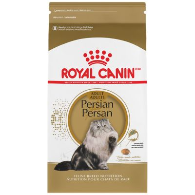 Persian Dry Cat Food Royal Canin Feline Breed Nutrition