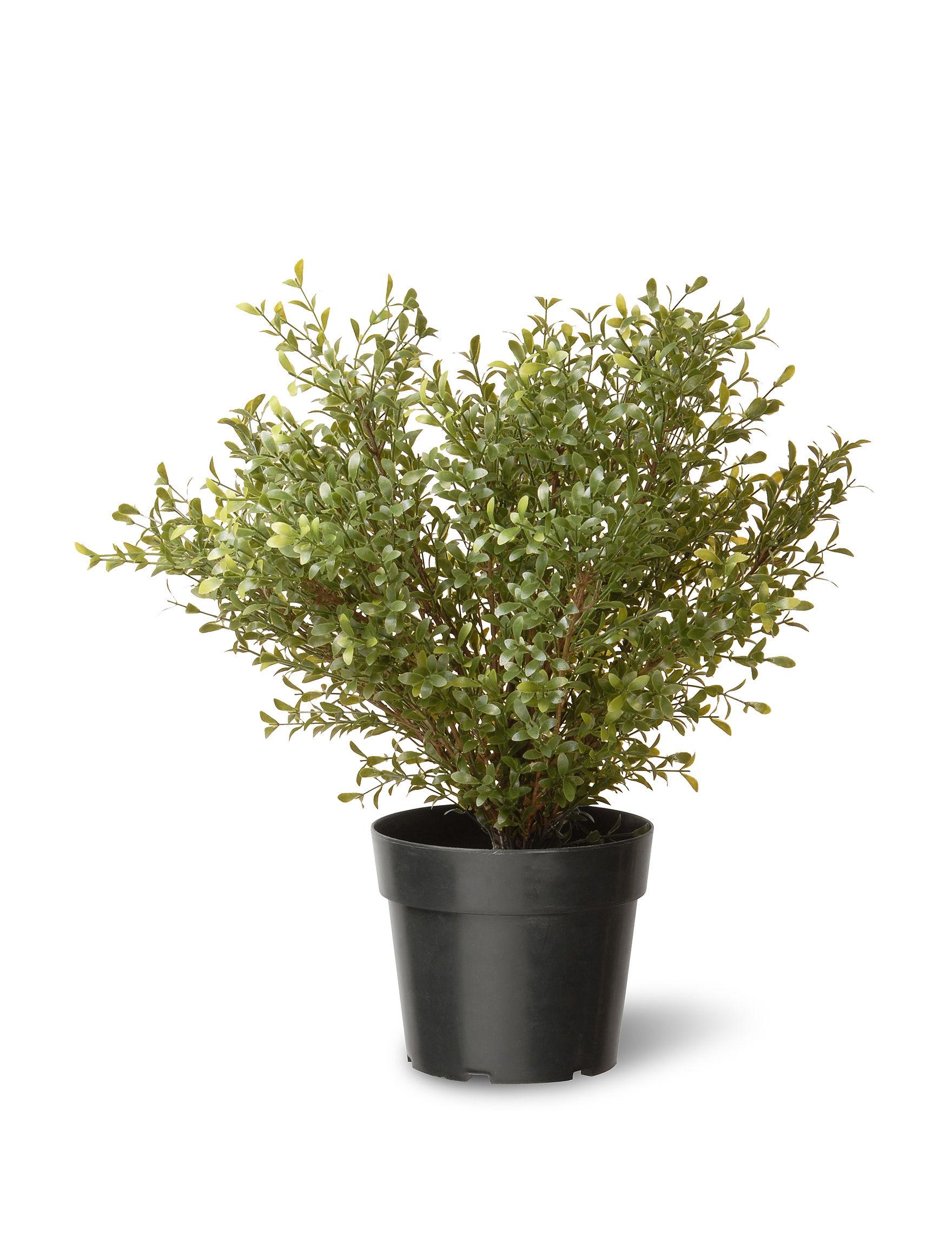 Outdoor Decor Company National Tree Company 24 Inch Argentia Plant With Pot Stage Stores