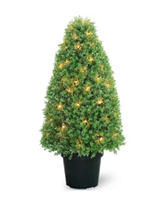 National Tree Company 36 Inch Pre-Lit Boxwood Tree with Pot