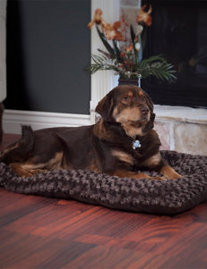 Paw Chocolate Pet Beds & Houses
