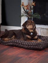 PAW Extra Large Lavish Cushion Pillow Furry Pet Bed