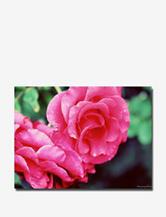 Trademark Fine Art Ariane Moshayedi 'Rose Dew' Canvas Art