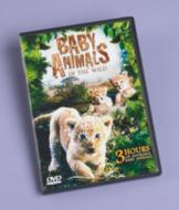 Baby Animals in the Wild DVD