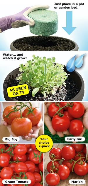 Tomato Rocket - Set of 2 Big Boy