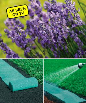 Roll Out Bed of Lavender