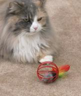 Mouse-in-a-Cage Cat Toy